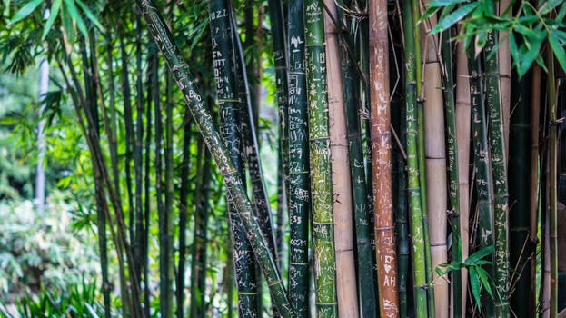 Bamboo tree gives more oxygen